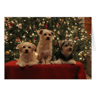 Tarjeta de Navidad del trío del perrito