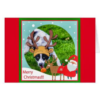 Tarjeta de Navidad divertida del border collie