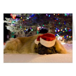 Tarjeta de Navidad el dormir Leonberger