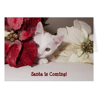 Tarjeta de Navidad tímida del Poinsettia del
