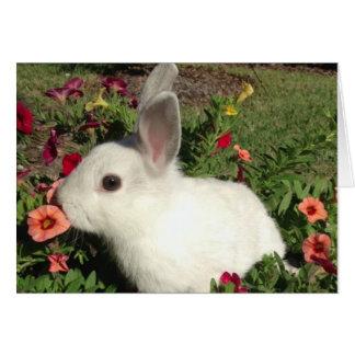 Tarjeta de nota adorable del conejo