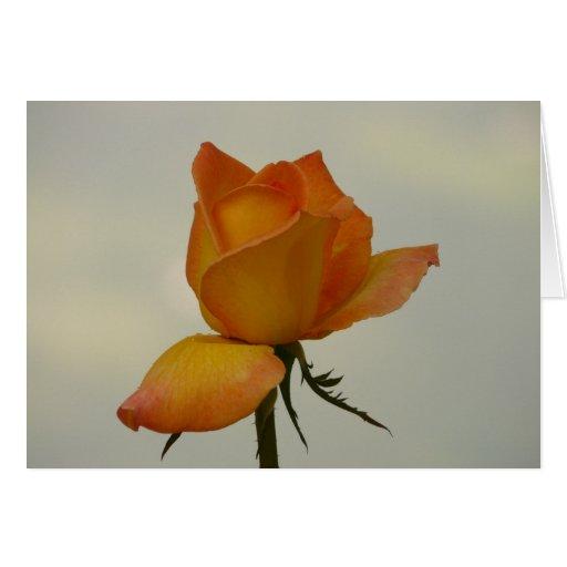 Tarjeta de nota anaranjada del capullo de rosa