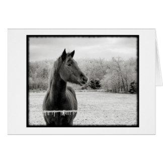 Tarjeta de nota blanco y negro del caballo del