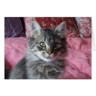 Tarjeta de nota con la foto del gatito