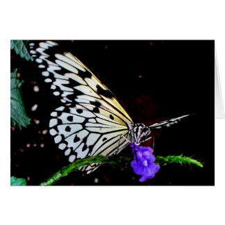 Tarjeta de nota de la mariposa