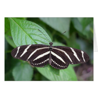 Tarjeta de nota de la mariposa 4