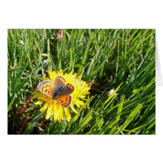 Tarjeta de nota de la mariposa del cobre americano
