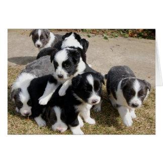 Tarjeta de nota de los perritos del border collie