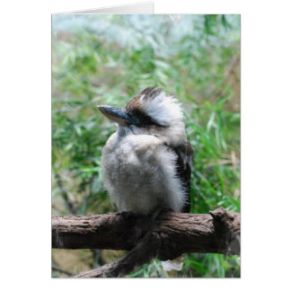 Tarjeta de nota de risa de Kookaburra