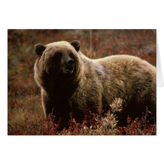 Tarjeta de nota del oso grizzly