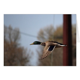 Tarjeta de nota del pato silvestre
