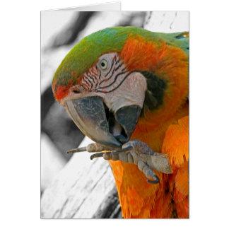Tarjeta de nota del pie del Macaw del Harlequin