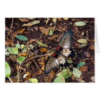 Tarjeta de nota en blanco de la mariposa