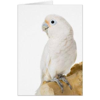 Tarjeta de nota en blanco linda del pájaro blanco