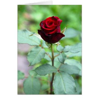 Tarjeta de nota roja del capullo de rosa