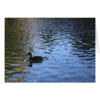 Tarjeta de nota solitaria del pato - esconda