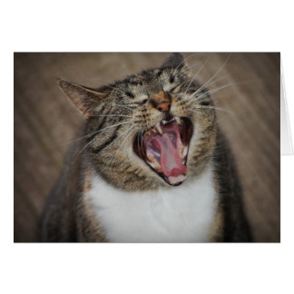 Tarjeta de risa del gato de la ha ha ha