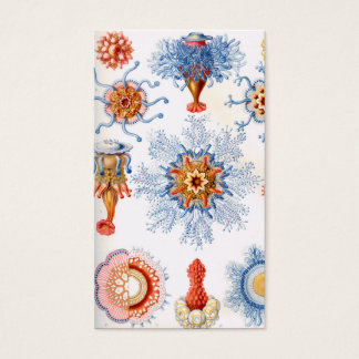 Tarjeta De Visita ¡Bluebottle de las medusas de Ernst Haeckel