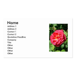 Tarjeta de visita color de rosa rosada de la flor