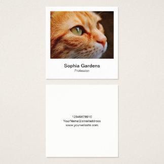 Tarjeta De Visita Cuadrada Estilo inmediato de la foto - gato del jengibre