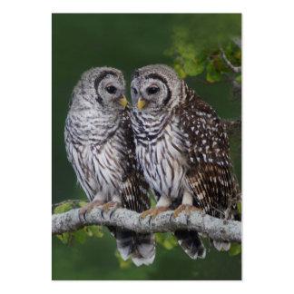 Tarjeta de visita de la fauna del Birder de los