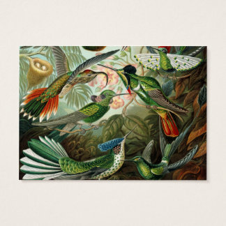 Tarjeta De Visita Ilustracion científico de los colibríes del