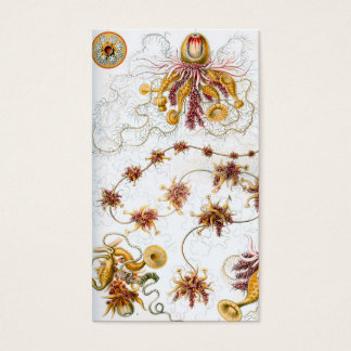Tarjeta De Visita Medusas de Ernst Haeckel Siphonophorae