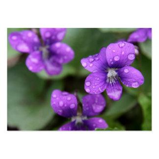 Tarjeta de visita púrpura mojada de las violetas