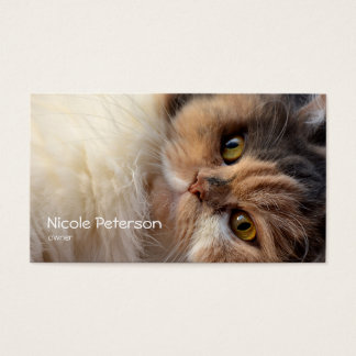 Tarjeta De Visita salón de belleza del mascota - gato persa