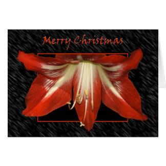 Tarjeta del Amaryllis del navidad