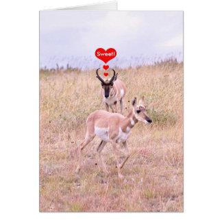 Tarjeta del amor del antílope