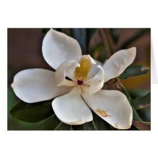 Tarjeta del ángel de la magnolia