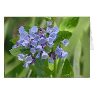 Tarjeta del bluebell de Virginia (virginica del