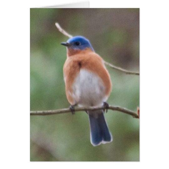 Tarjeta del Bluebird