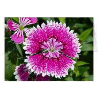 Tarjeta Del clavel del clavel cierre rosado/púrpura para