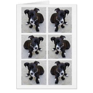Tarjeta del collage del perrito del Loki