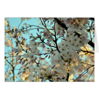 Tarjeta del diseño de la flor de cerezo