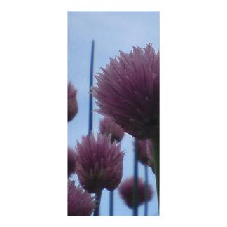 Tarjeta del estante - imagen    1 de las cebolleta tarjetas publicitarias