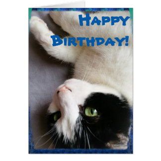 Tarjeta del feliz cumpleaños de la foto del gato
