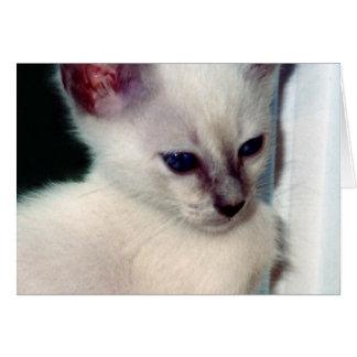 Tarjeta del gatito de Sasha
