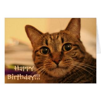 Tarjeta del gato de Tabby del feliz cumpleaños