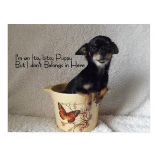 tarjeta del humor del perrito de la chihuahua tarjeta postal