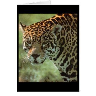 tarjeta del jaguar