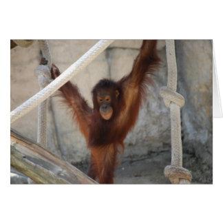 Tarjeta del joven de Orangutang