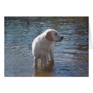 Tarjeta del labrador retriever en el lago