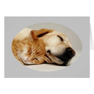 Tarjeta del labrador retriever y del gato