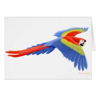 Tarjeta del Macaw del escarlata