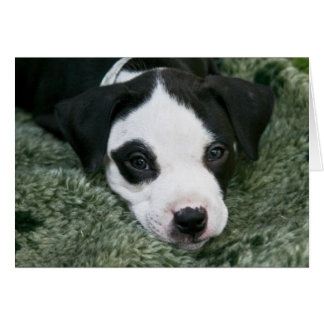 """Tarjeta del perrito de Terrier de pitbull - """"Angie"""
