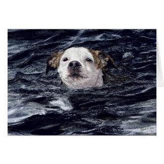 """Tarjeta del perro nadador de la """"determinación"""" -"""