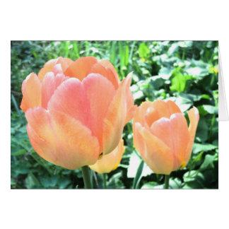 Tarjeta del tulipán